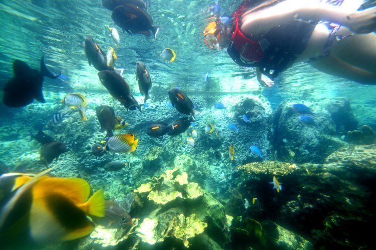 Swimming Aquarium (25)