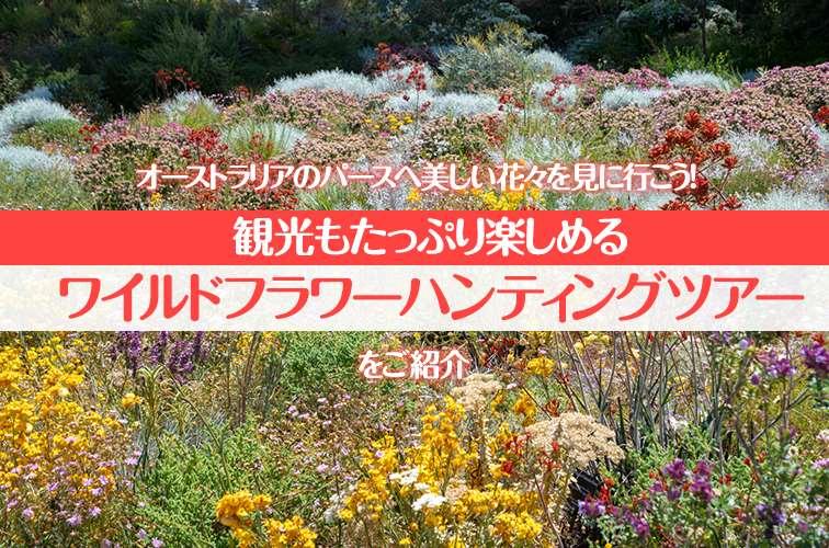 オーストラリアのパースへ美しい花々を見に行こう!観光もたっぷり楽しめるワイルドフラワーハンティングツアーをご紹介
