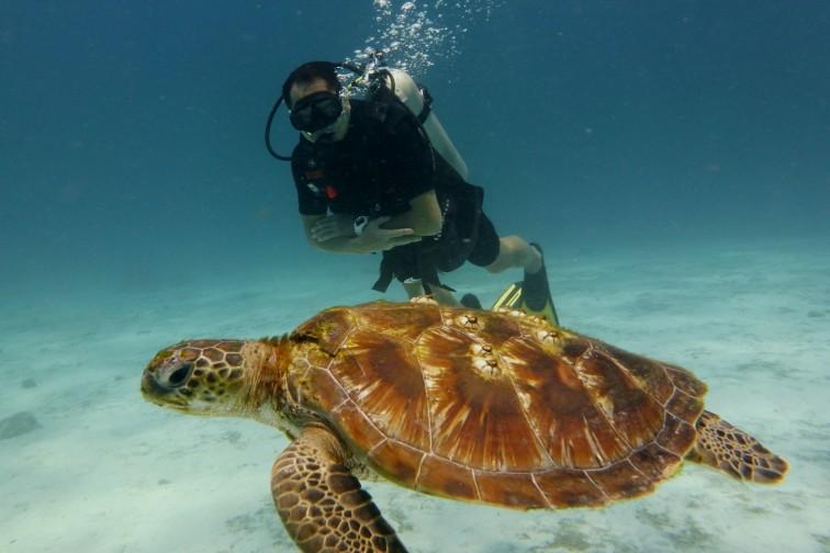 水中を泳ぐ海亀と人