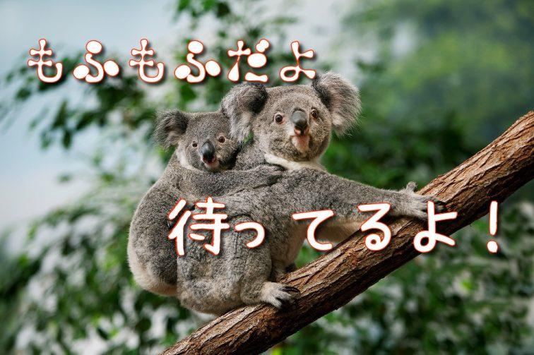 日本 入国制限緩和
