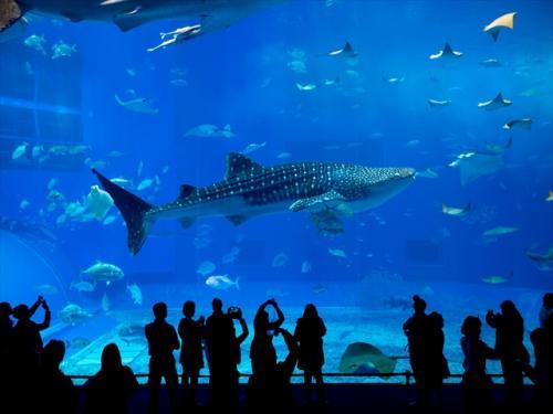 aquarum okinawa tour