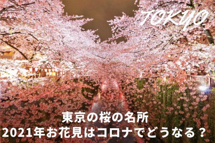 桜の 花見