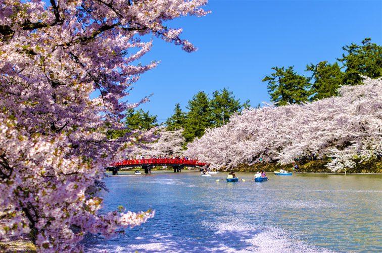 お花見2021 桜名所 コロナ 弘前公園