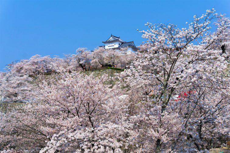 お花見2021 桜名所 コロナ 岡山県 津山城