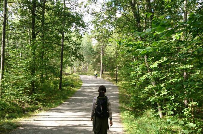 スウェーデンの美しい森をハイキング