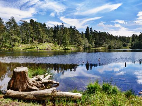 ウィンダミア:自然豊かな風景