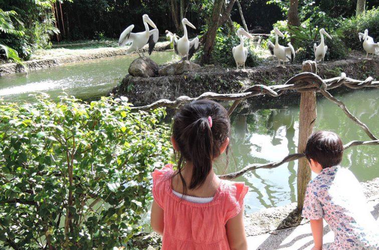 シンガポール 動物園にて