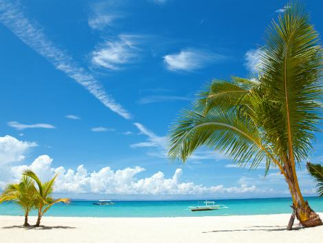 セブ:ビーチとヤシの木