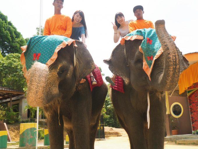 象にも乗りました!