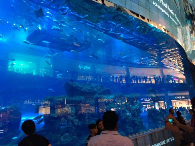 ドバイモールには水族館もありました!