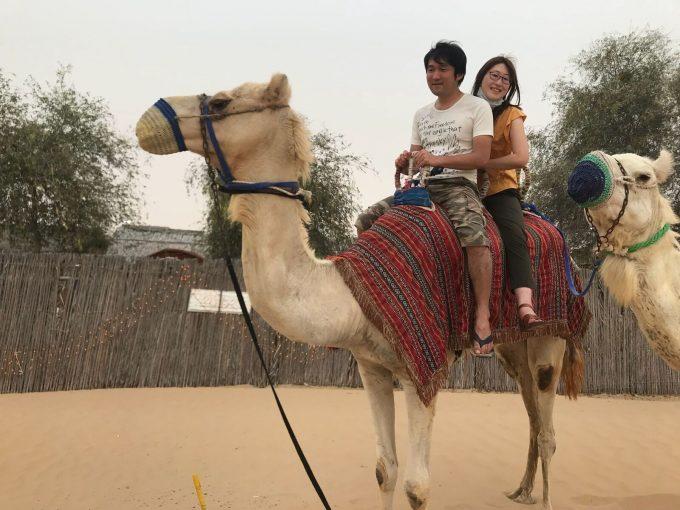 砂漠ラクダ