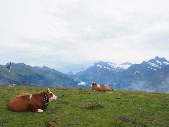 メンリッヒェン山ハイキング