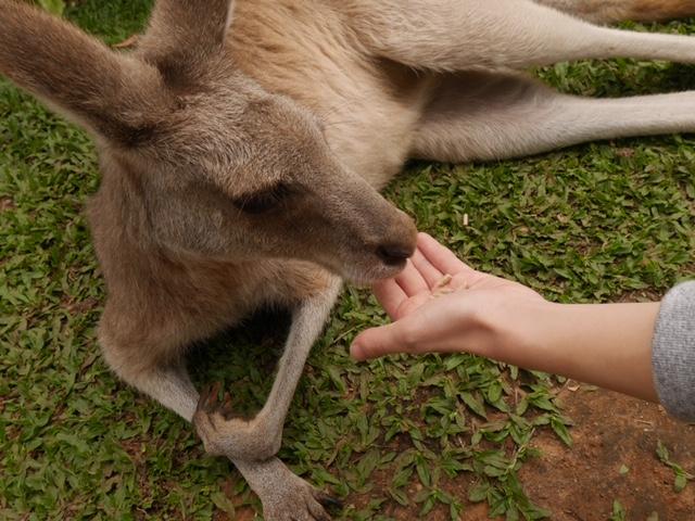 動物園でワラビーと触れ合い!!