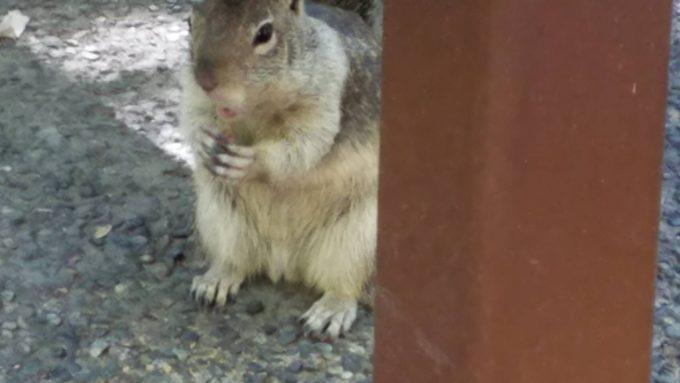 ヨセミテ国立公園のリス