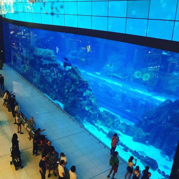 ドバイモールの水族館