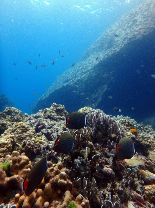ラチャヤイ島の熱帯魚!