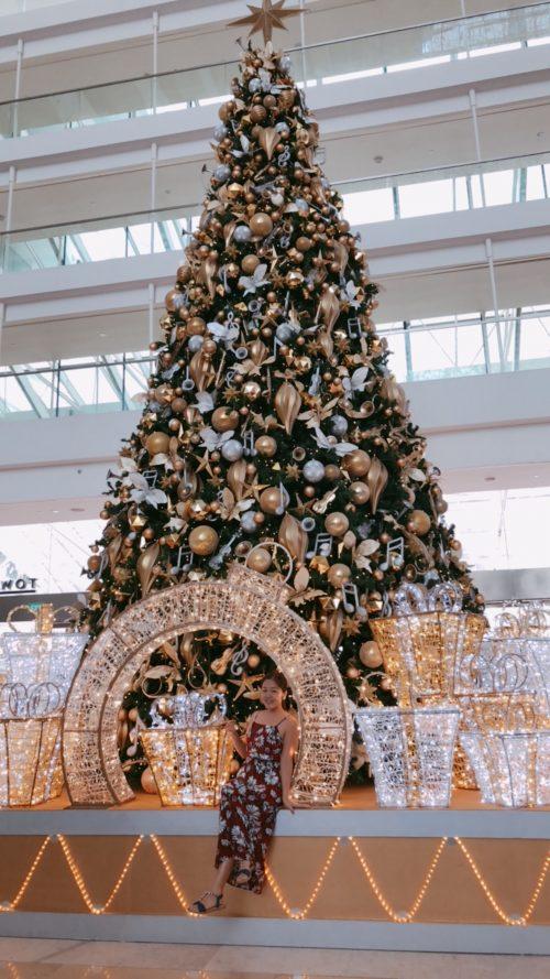 ちょっと気が早い?クリスマスツリー