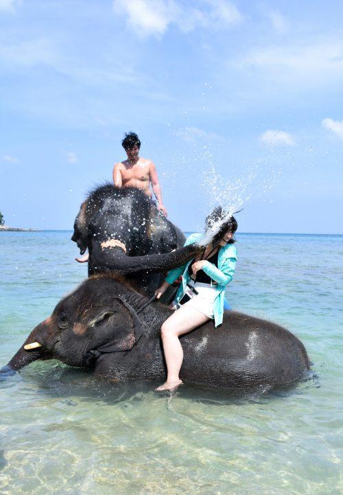 象と水遊び