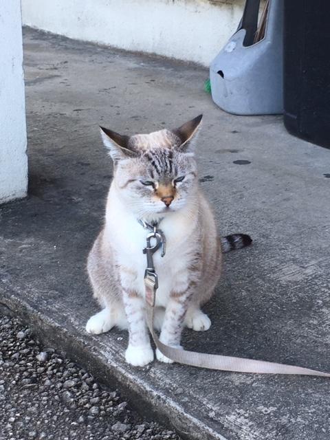 コンビニ大阪の猫「ハナ」