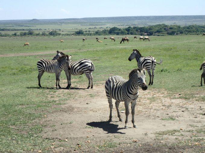 野生動物の楽園「マサイマラ国立保護区」