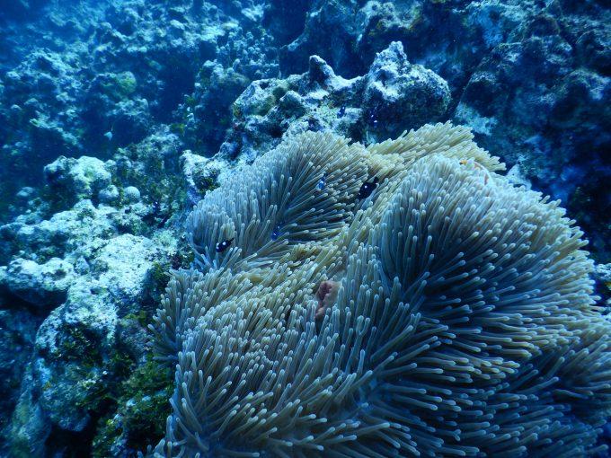 透明度が高いグアムの海