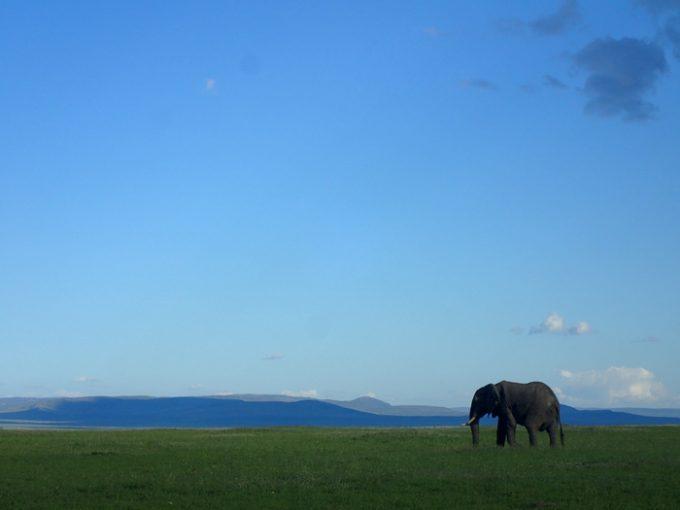 アフリカの雄大な自然、忘れません。