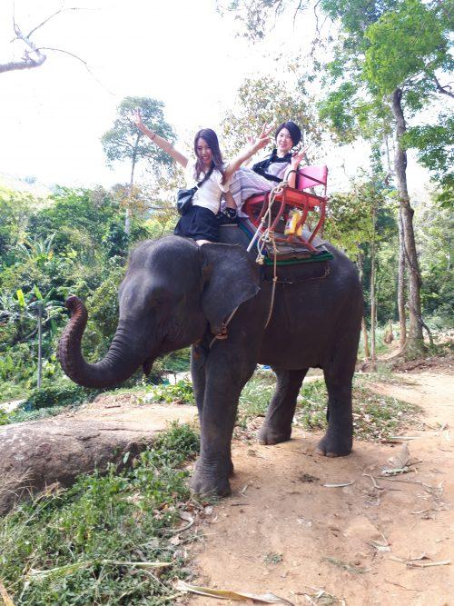象に乗ってお散歩!