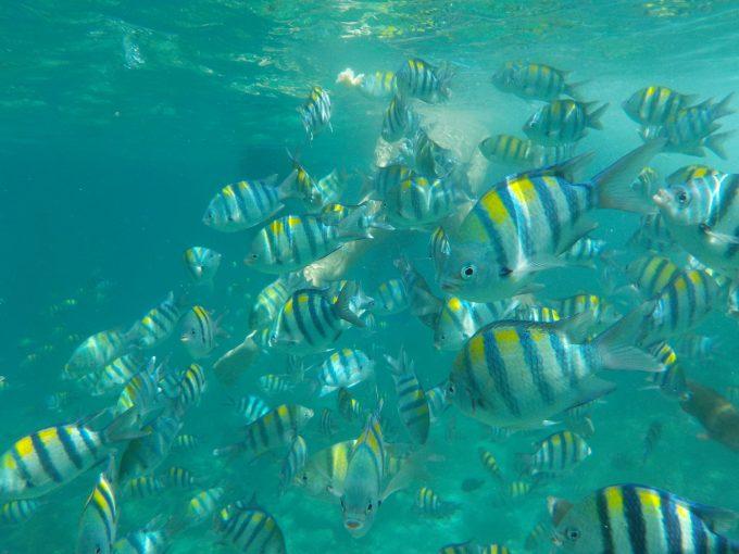 ダイビング中に水中カメラで撮影
