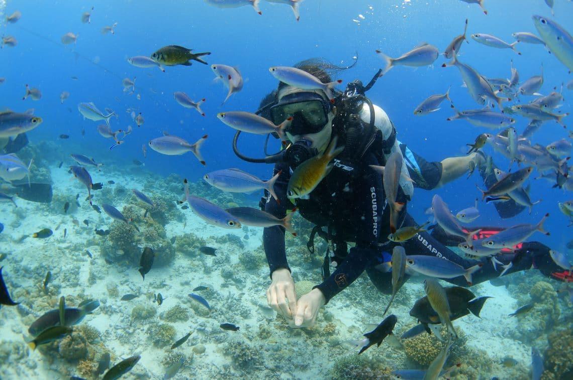 ヒルトゥガン島での体験ダイビング