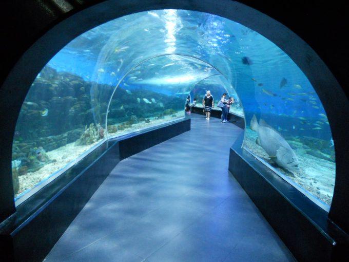 オーシャンパークのトンネル水槽