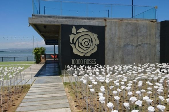 10,000 roses
