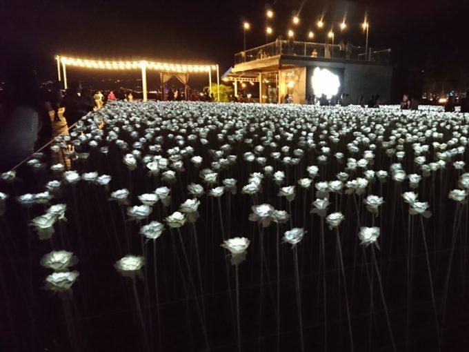 セブ島の新しい観光スポット「一万本のバラ」