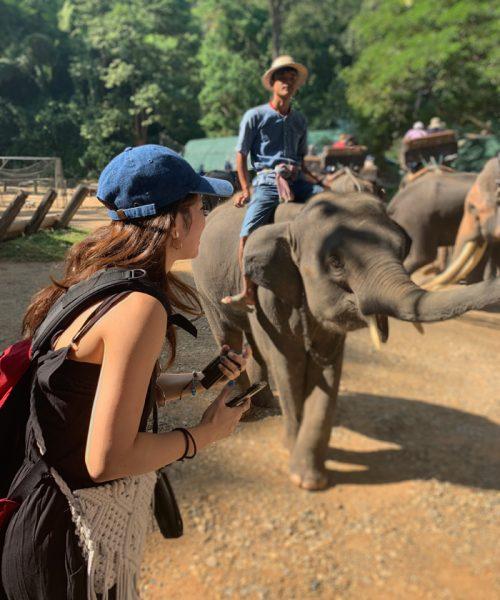 子ども象さんかわいい!