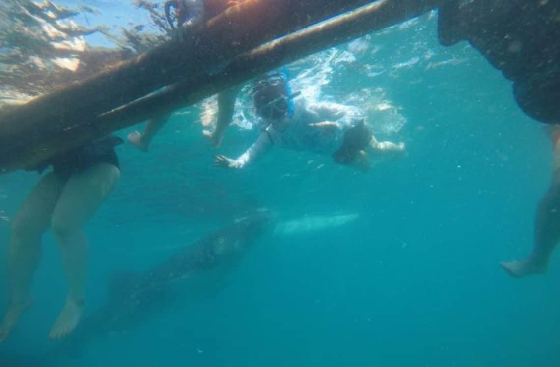 ダイビング 水中からの写真
