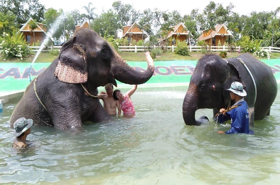 象と一緒に水遊び