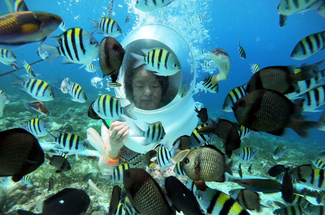 魚に餌やり ダイビング
