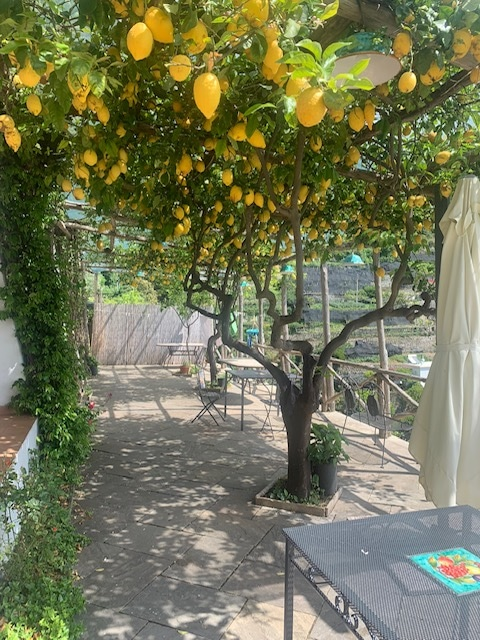 レモン畑もガーデンテラス