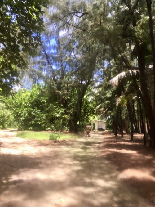 ココス島内のジャングル トカゲがたくさんいました