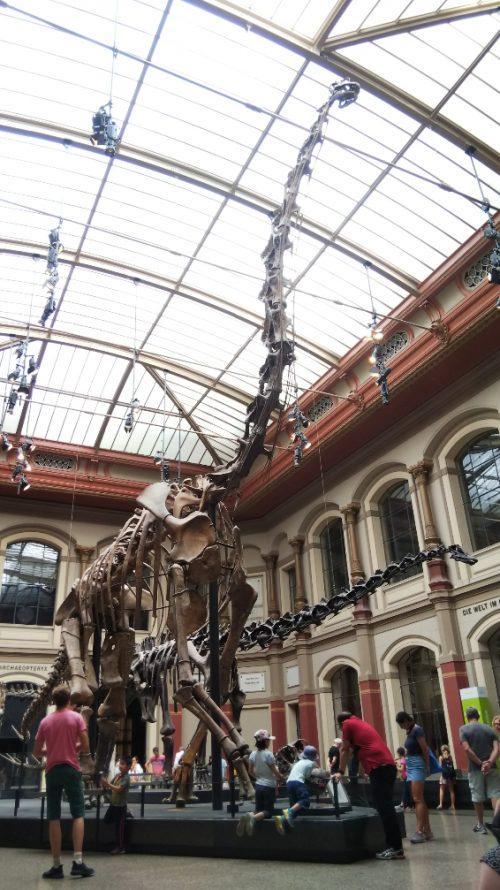 ベルリン自然史博物館