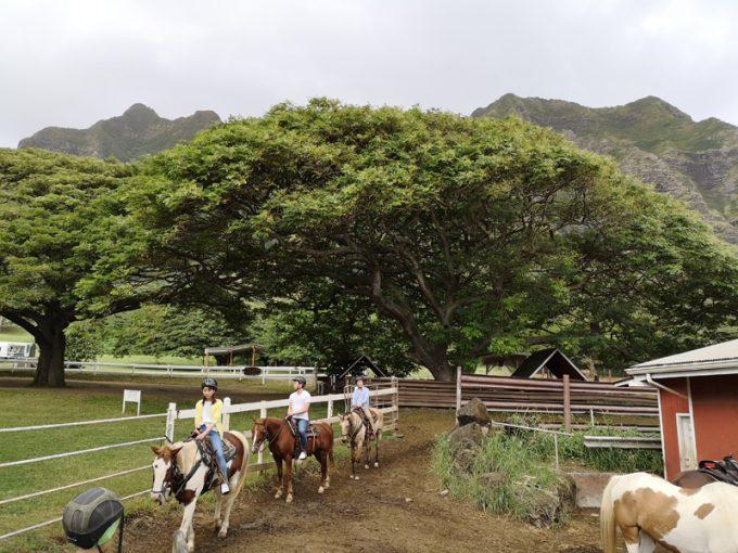 気持ちよかった乗馬体験!