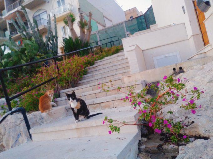 ホテル周辺は猫がたくさんいました