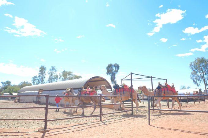 すごく楽しかったラクダ牧場