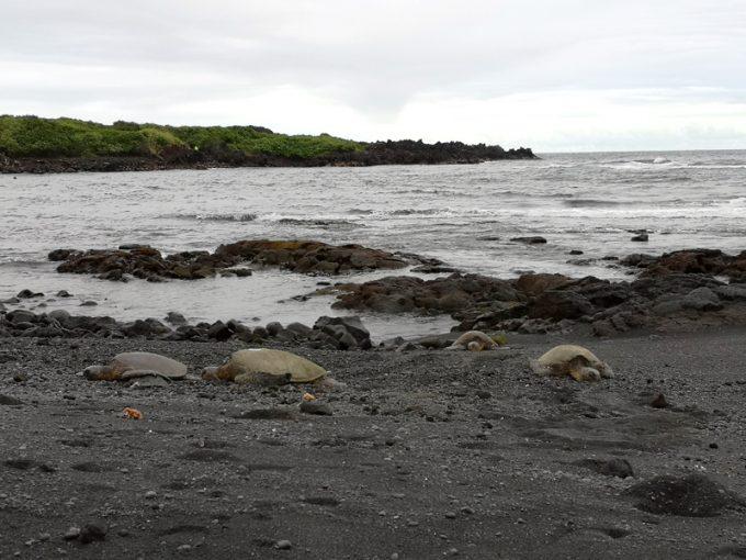 黒砂海岸とかわいいウミガメ