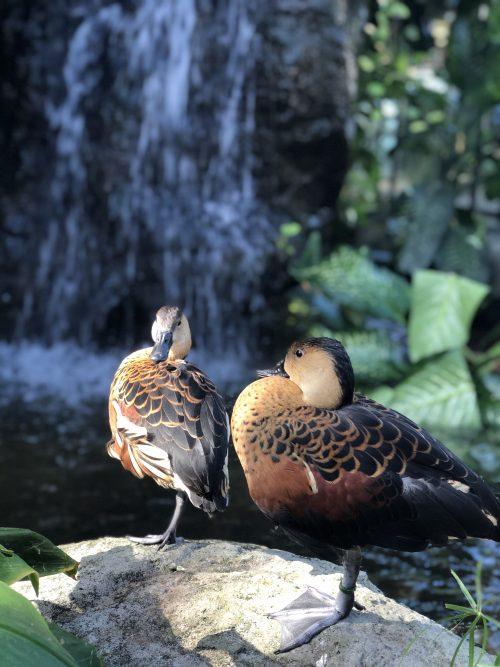 グリーン島の野生の鳥たち