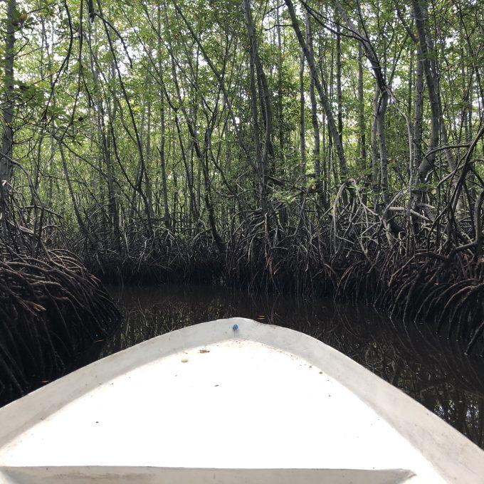 レンボンガン島で見たマングローブ