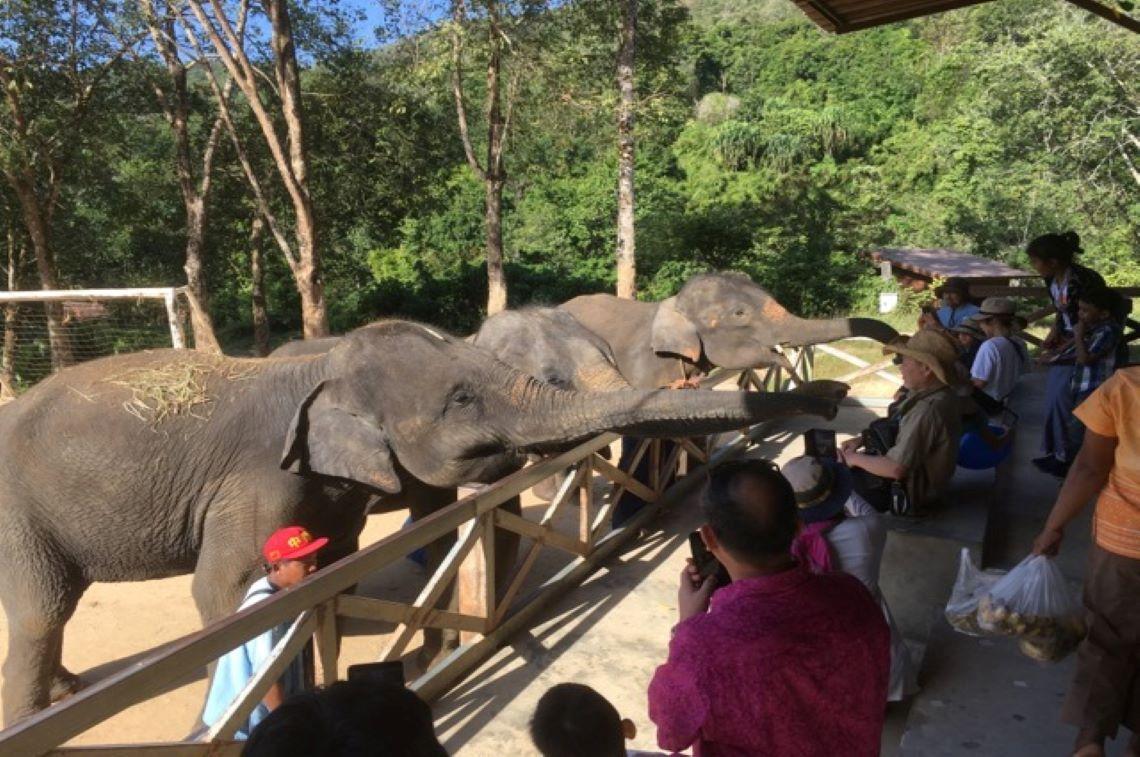 象を間近で見られました!