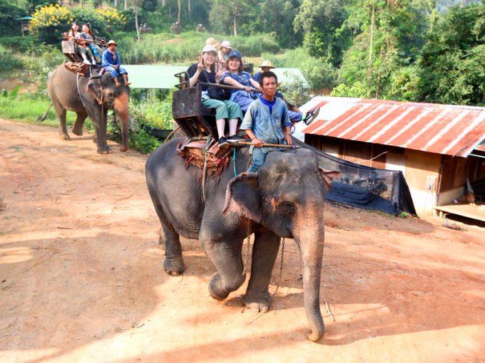 タイと言えば象乗り体験!