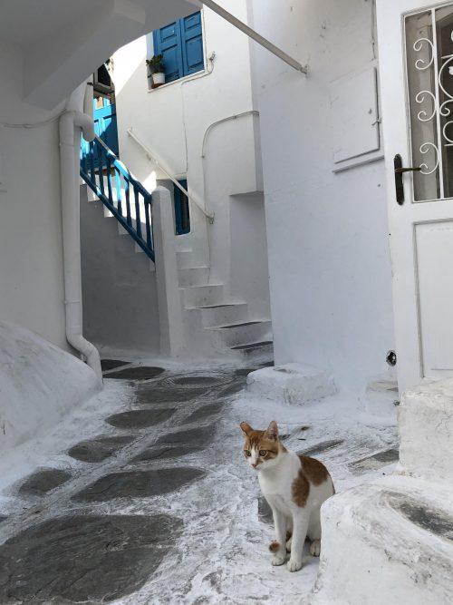 ミコノス名物、猫と迷路