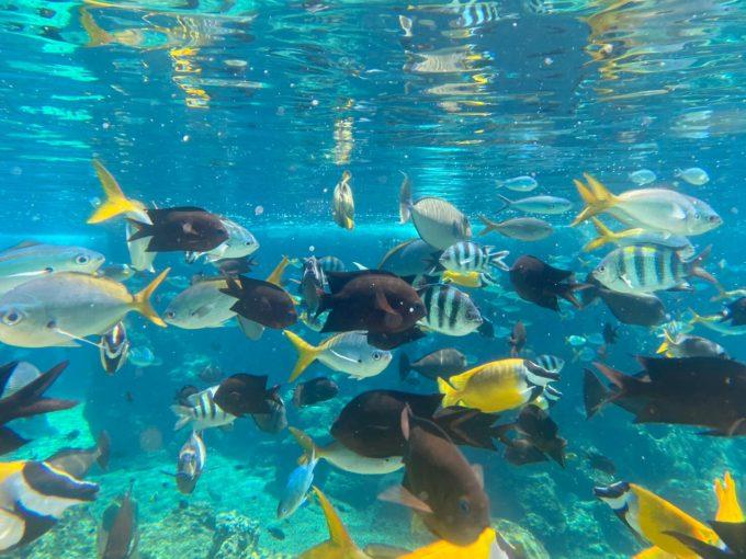 アドベンチャー・コーブ・ウォーターパークの魚