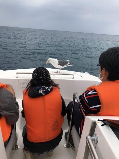 クルージングでは途中、海猫に餌付け体験!